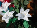 Tři velikonoční lilie.